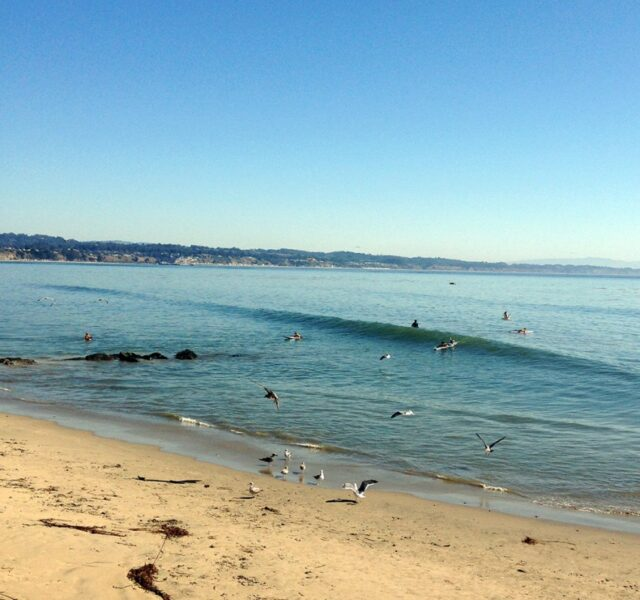 Fishy but Fun (Capitola 101813)